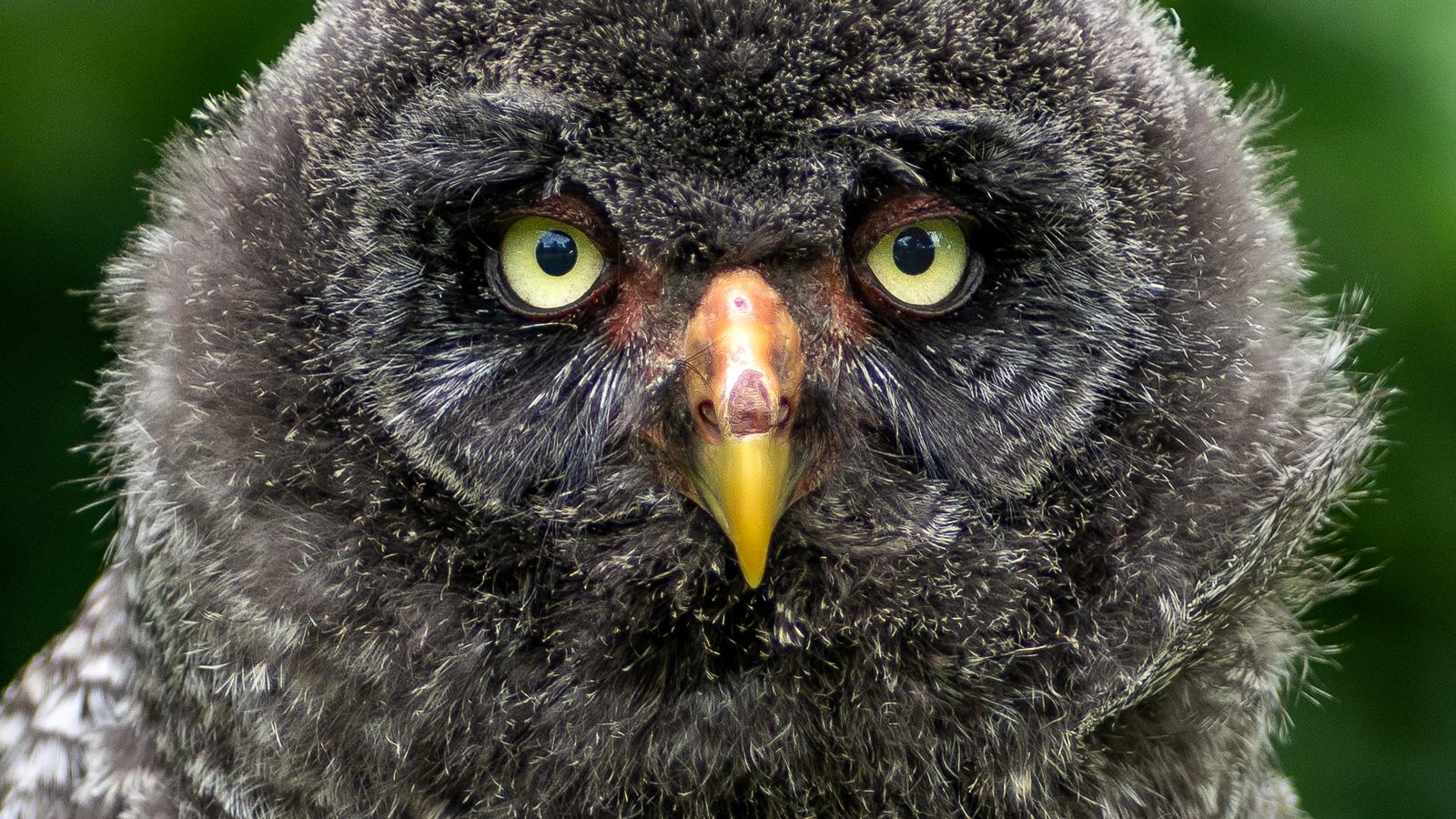 Roofvogelworkshop Arend Spaans 10-06-2018