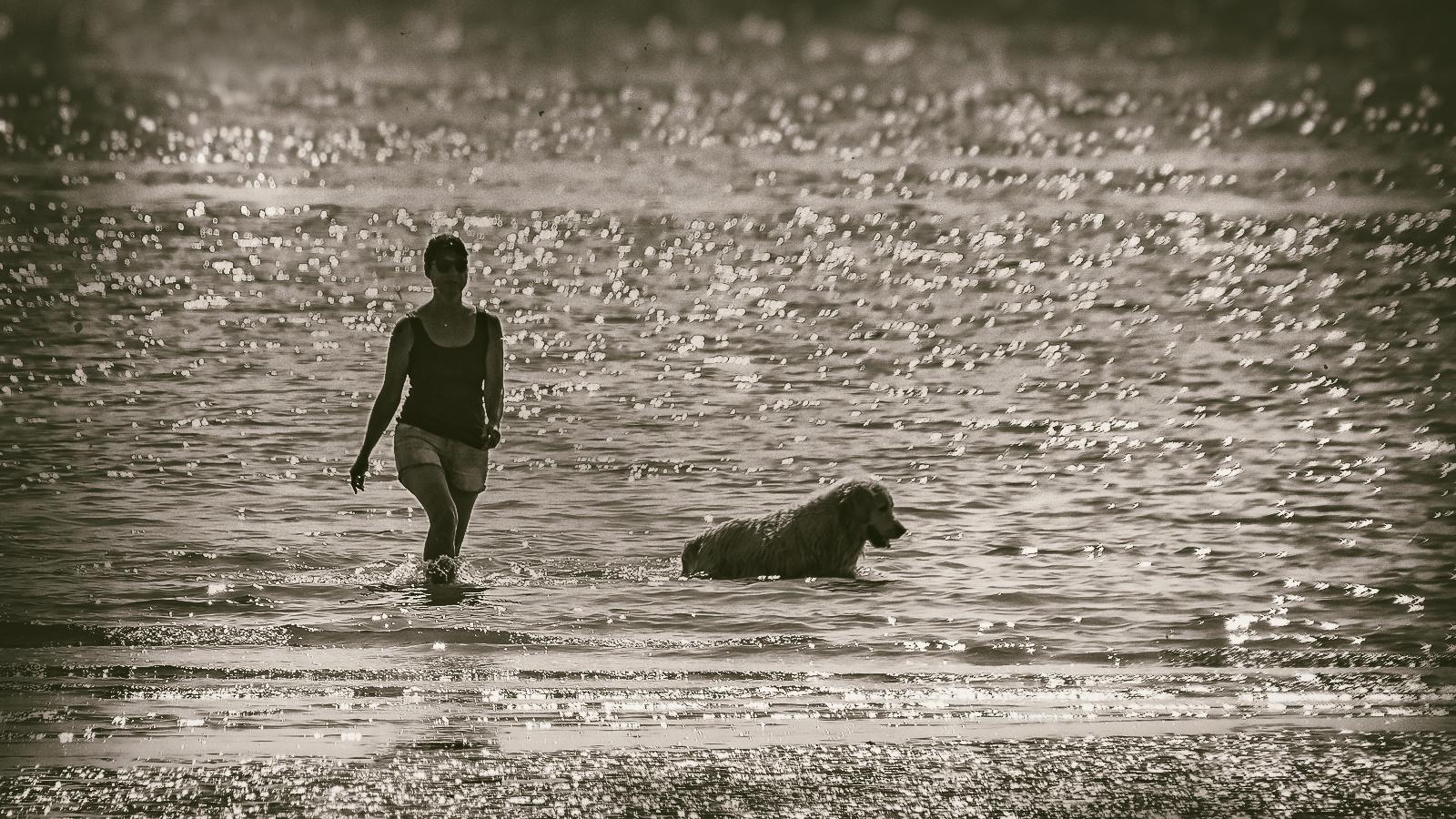 Strandwandeling met hond (Vlissingen - 27-08-2017)
